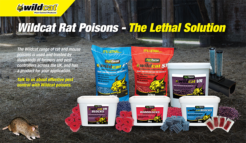 Buying Rat Poison? Here's what you need to do!